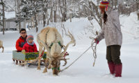 Green Leaf Niseko Village Reindeer sledding | Niseko Village