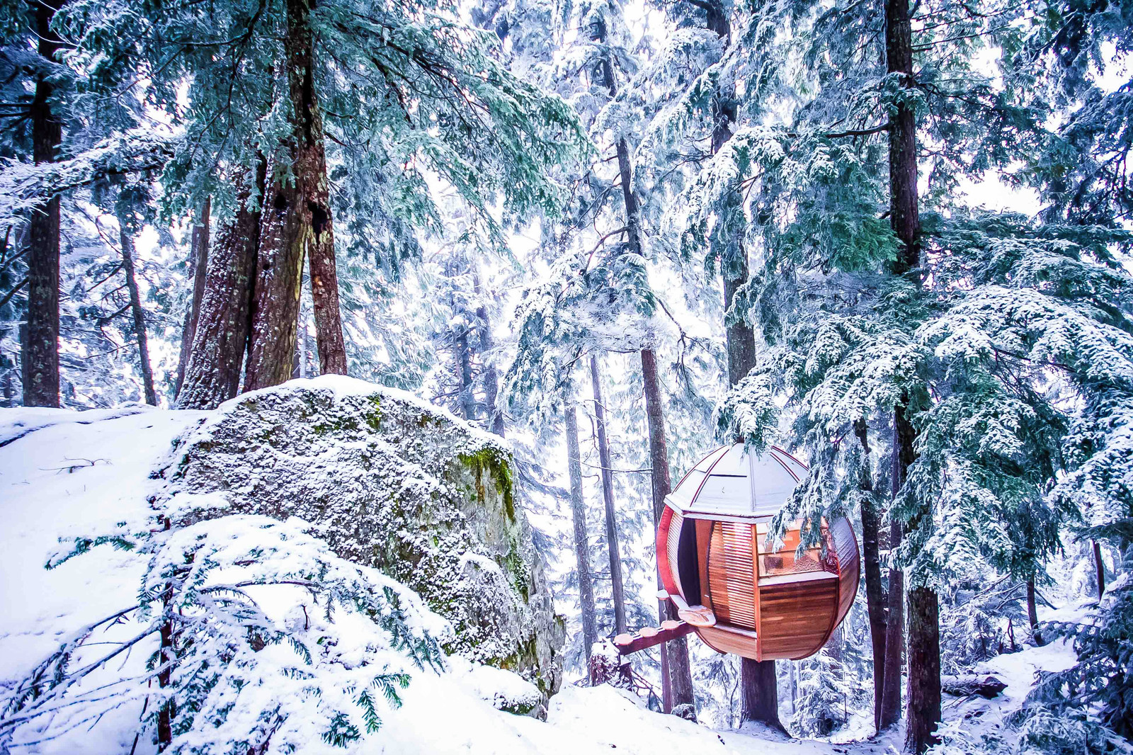 6-star Treehouse Suites Coming to Niseko