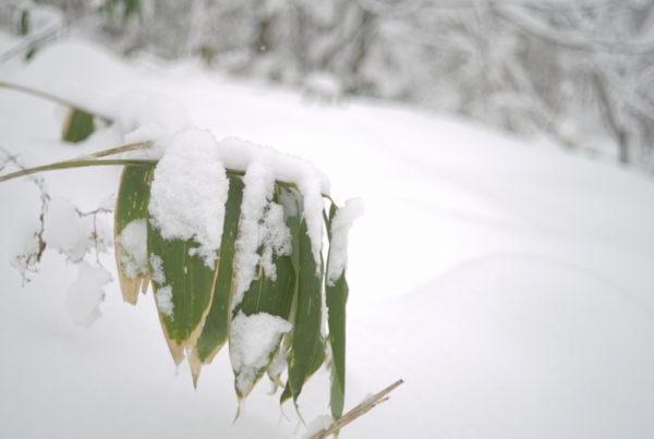 Powderlife Niseko Snow Report 20171215