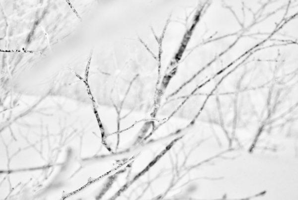 Powderlife Niseko Snow Report 20170122