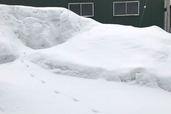 Powderlife Niseko Snow Report 20170308