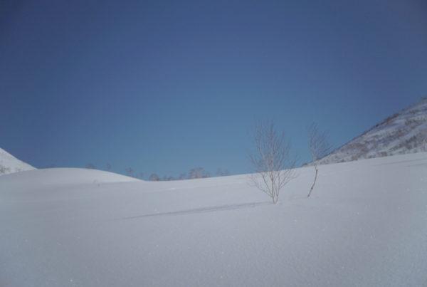 Powderlife Niseko Snow Report 20180322