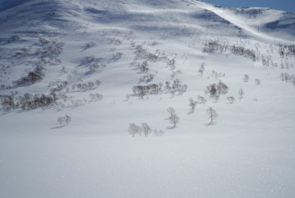 Powderlife Niseko Snow Report 20180324