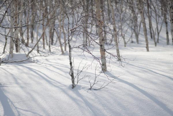 Powderlife Niseko Snow Report 20180325